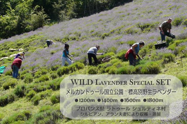 標高別野生ラベンダー 1200m 1400m 1600m 1800m 各10ml 4本セット
